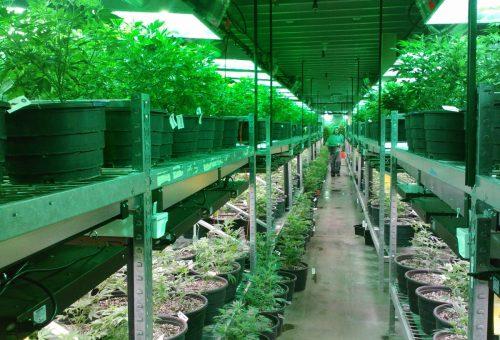 New-Nova-Scotia-cannabis-facility-receives-certification-from-Health-Canada-1.jpg