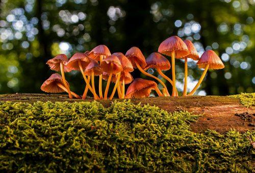 mushroom-3659165_19202.jpg